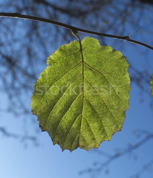 Foglia verde cielo albero arancione fabbrica rosso Foto d'archivio © gemenacom