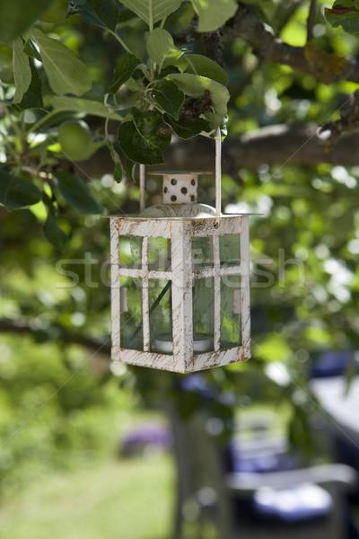 Old lamp hanging in a three Stock photo © gemenacom
