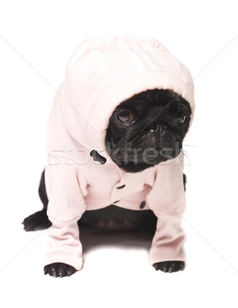 Black pug dressed in a pink hoodie Stock photo © gemenacom