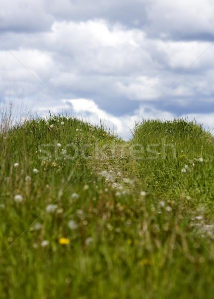 Summer Hill Stock photo © gemenacom