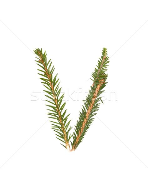 Lucfenyő levél izolált fehér fa tél Stock fotó © gemenacom