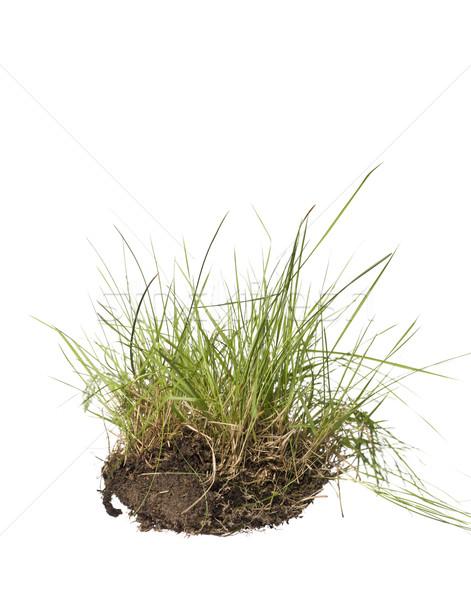 Gras isolated on a white background Stock photo © gemenacom