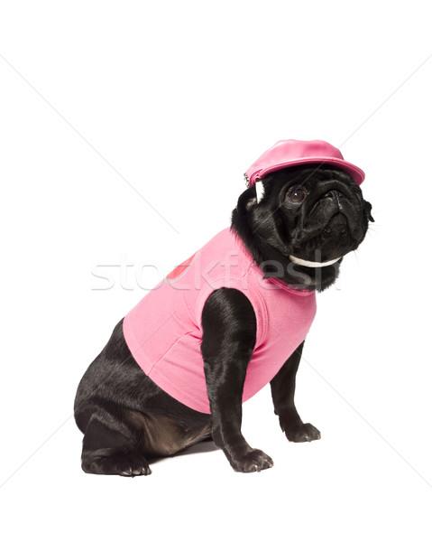 Cão rosa isolado branco animal cachorro Foto stock © gemenacom