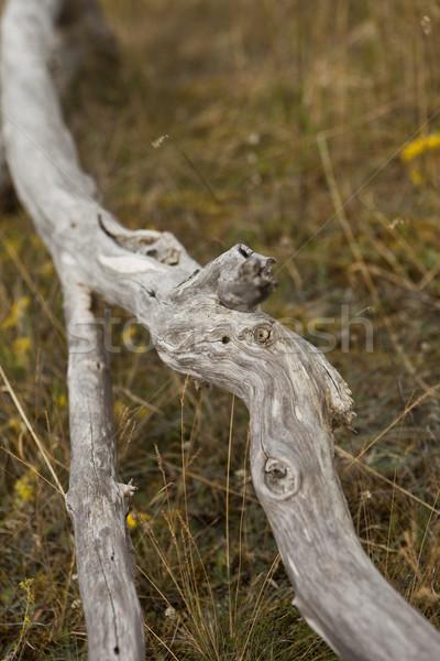 şube ölüm bitki çalı büyüme makro Stok fotoğraf © gemenacom