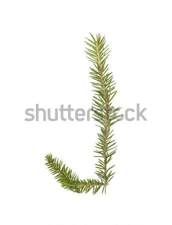 Fichte Schreiben isoliert weiß Baum Winter Stock foto © gemenacom