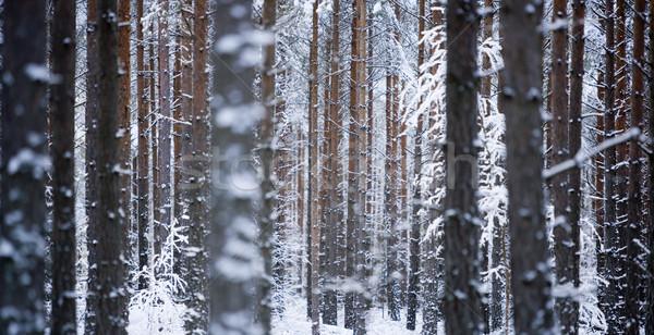 Trees Stock photo © gemenacom