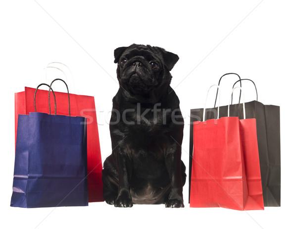 Noir chien isolé blanche Shopping Photo stock © gemenacom