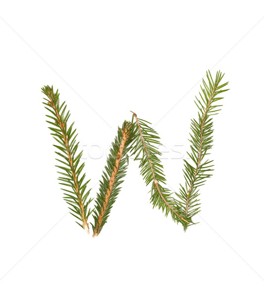 Spruce twigs forming the letter 'W' Stock photo © gemenacom