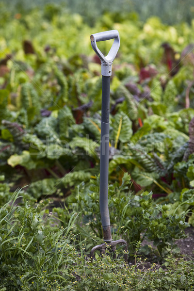 A spade in the garden Stock photo © gemenacom