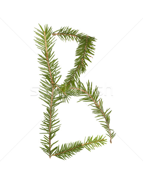 Wystroić list odizolowany biały drzewo zimą Zdjęcia stock © gemenacom