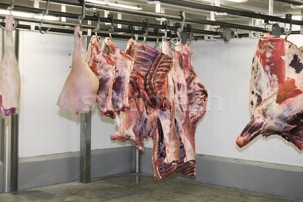 Akasztás hús állat gyár étel nyers Stock fotó © gemenacom