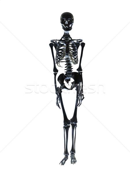 Black skeleton towards white background Stock photo © gemenacom