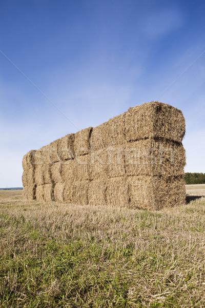 Bale of Haystack Stock photo © gemenacom