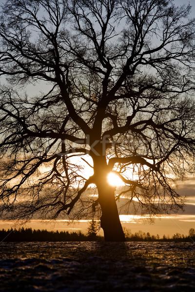 Albero retroilluminazione cielo sole inverno nube Foto d'archivio © gemenacom