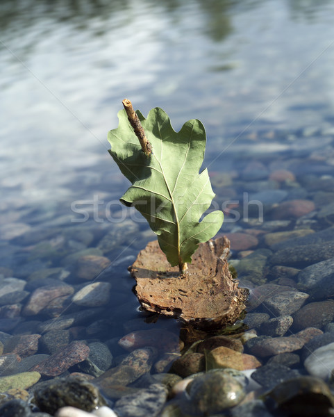 Corteza barco agua naturaleza hoja Foto stock © gemenacom