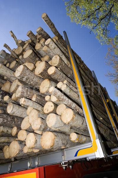 Buenos Aires közelkép fa út fa természet Stock fotó © gemenacom