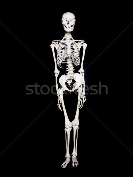 Skeleton towards black background Stock photo © gemenacom