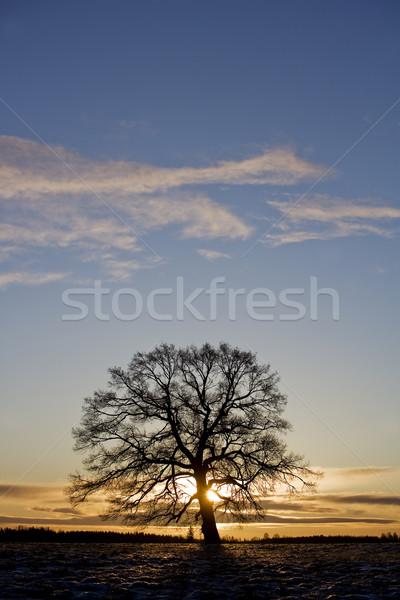 Fa háttérvilágítás égbolt nap tél felhő Stock fotó © gemenacom