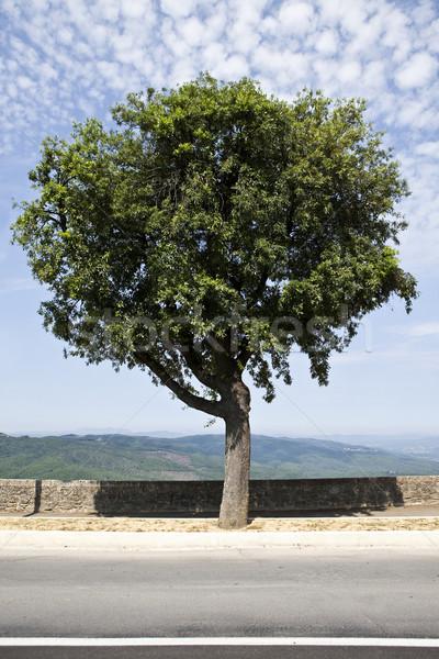 Olajfa toszkán völgy égbolt fa kék Stock fotó © gemenacom