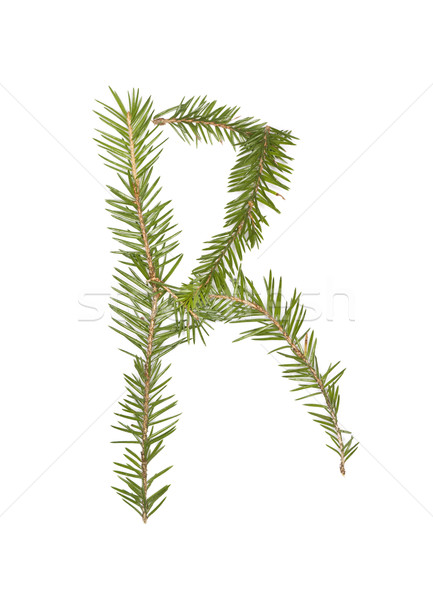 Spruce twigs forming the letter 'R' Stock photo © gemenacom