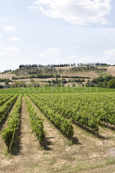 Wineyard Stock photo © gemenacom