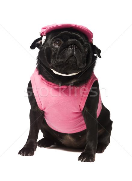 Dog dressed in pink  Stock photo © gemenacom