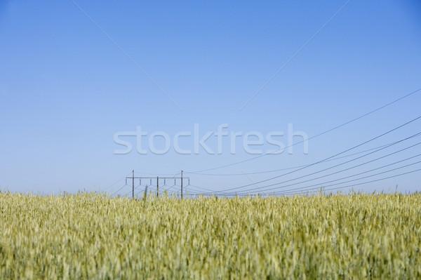 Power cables Stock photo © gemenacom