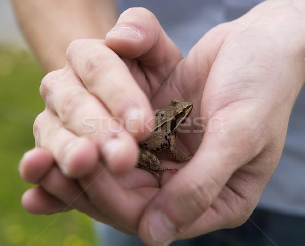 Gevangen kikker menselijke handen natuur Geel Stockfoto © gemenacom