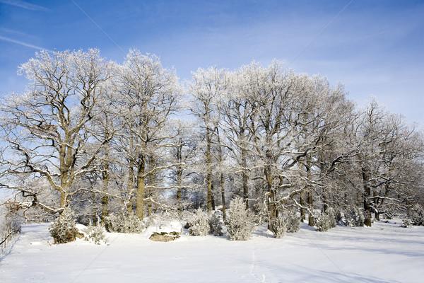 Winter Landscape Stock photo © gemenacom