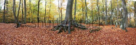 Panoramique vue forêt étage plein Photo stock © gemphoto