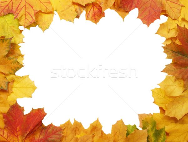 Frame Geel esdoorn bladeren witte bos Stockfoto © GeniusKp