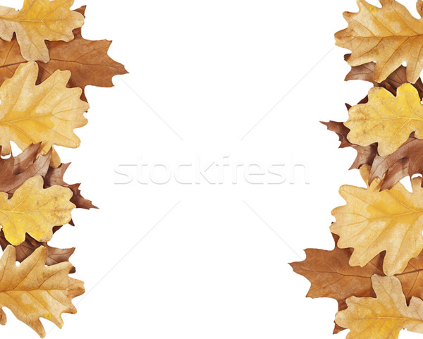 Rovere foglie lato immagine isolato bianco Foto d'archivio © GeniusKp