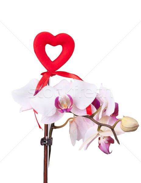 Rood hart zachte roze orchidee geïsoleerd Stockfoto © GeniusKp