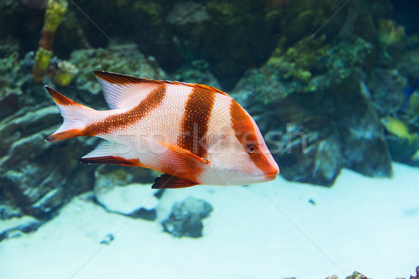fish in an aquarium Stock photo © GeniusKp