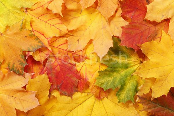 Colorato albero foresta natura sfondo Foto d'archivio © GeniusKp