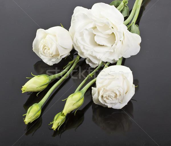 Witte rozen zwarte bloemen bruiloft schoonheid Stockfoto © GeniusKp
