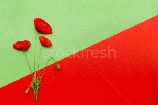 Floral red green card Stock photo © georgemuresan