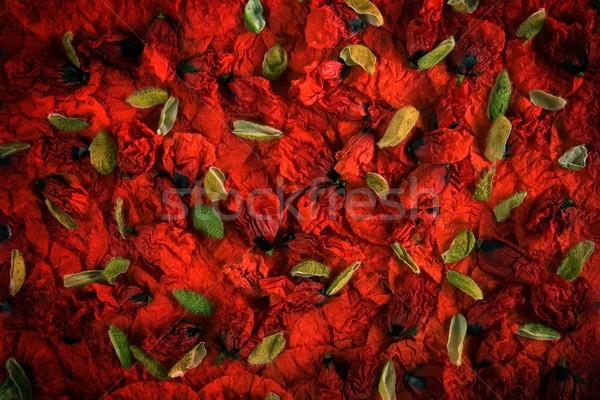 Red and green poppy buds Stock photo © georgemuresan