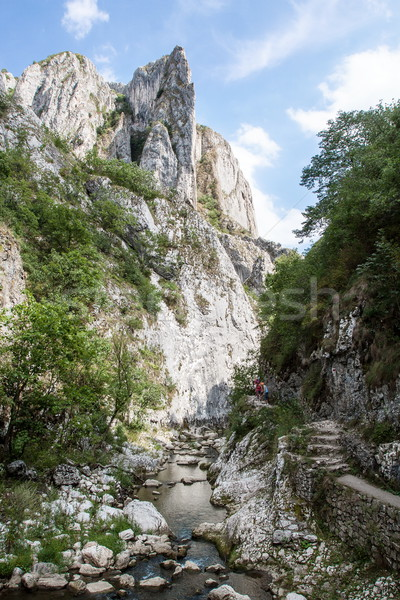 Gorge flowing stream Stock photo © georgemuresan