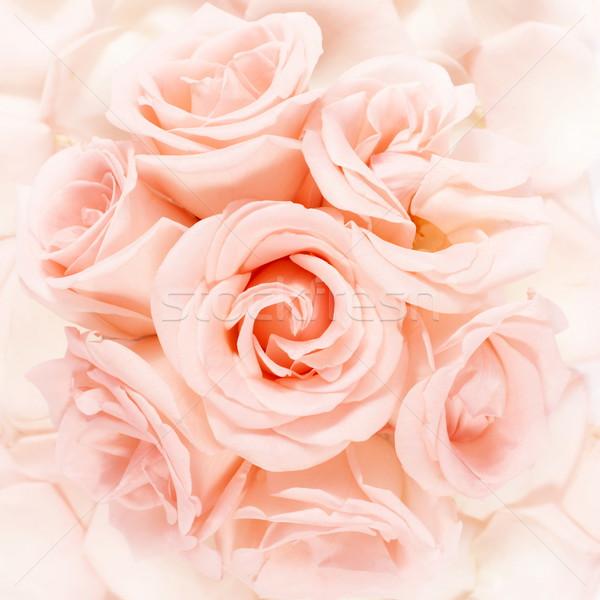 Rózsaszín rózsák virágcsokor egyezség szirmok virág Stock fotó © georgemuresan
