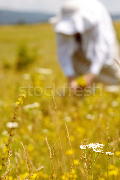 Picking herbs Stock photo © georgemuresan