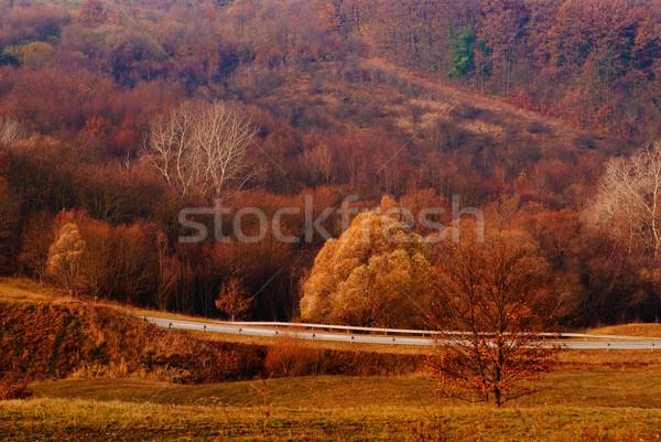 Güzel kırmızı turuncu sonbahar orman yol Stok fotoğraf © Geribody