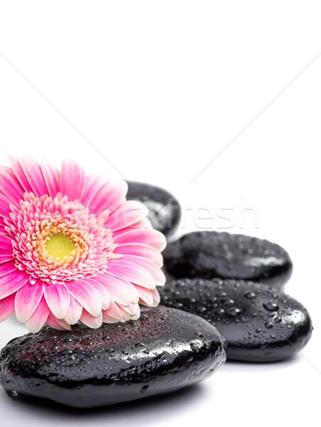 zen basalt stones and daisy isolated on white Stock photo © Geribody