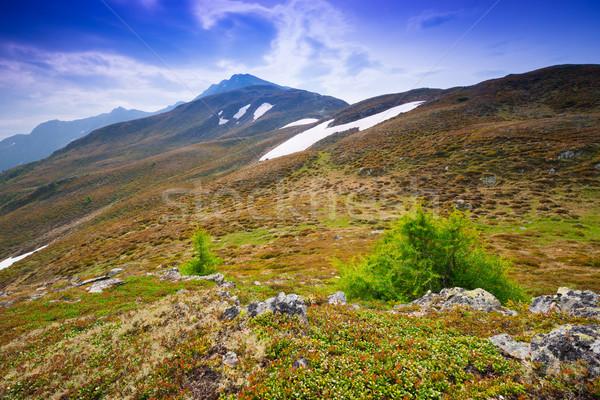 Alpesi tájkép fű természet nyár zöld Stock fotó © Geribody