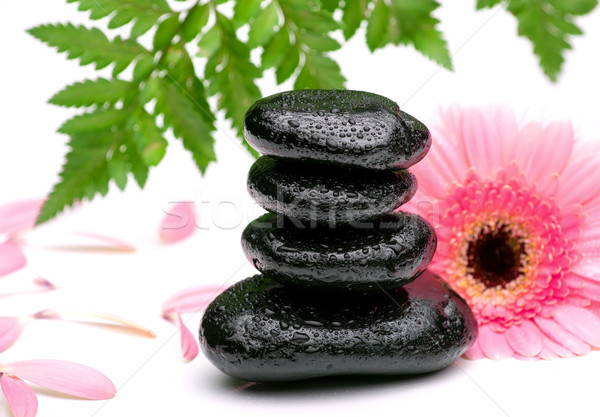 zen basalt stones and daisy with leaf Stock photo © Geribody