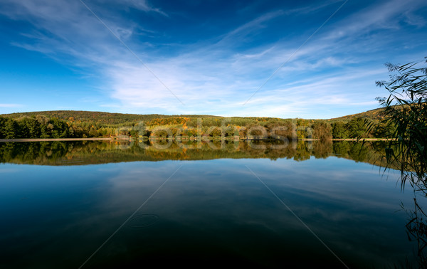 Beautiful forest reflecting on calm lake shore  Stock photo © Geribody