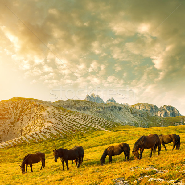 Beautiful mountain landscape with horses in the foreground Stock photo © Geribody