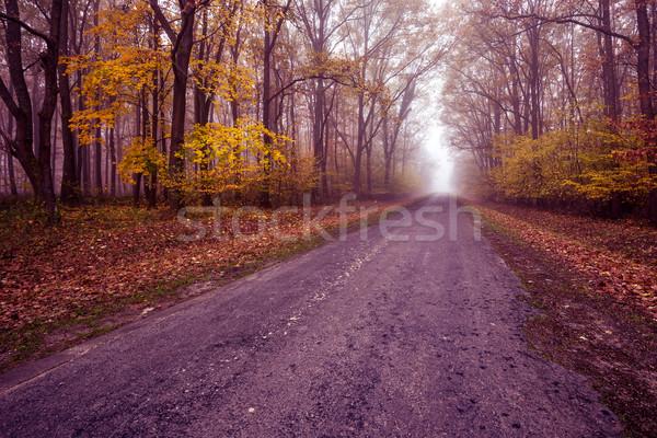 Karayolu erken puslu sonbahar sabah ağaç Stok fotoğraf © Geribody