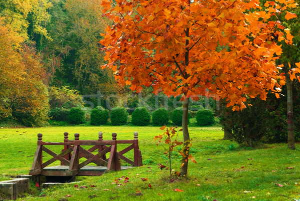 Wooden bridge in the autumn park Stock photo © Geribody