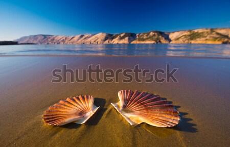 Beautiful shells on the beach Stock photo © Geribody